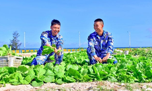 Harvesting vegetables with 'sand-to-earth' tech on S China Sea island beach