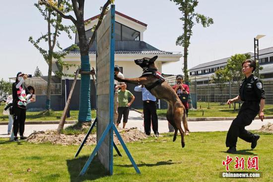 图片:上海嗅探犬训练中心