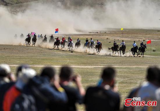 图片:新疆草地上的赛马