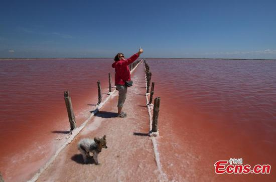 The magic of nature! Salt lake in Crimea has dreamlike pink waters