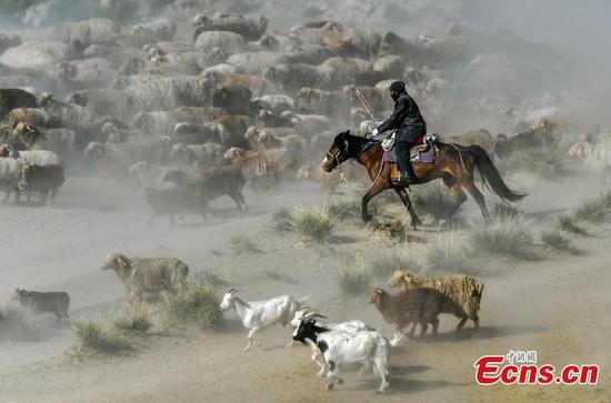 Seasonal livestock migration in Altay