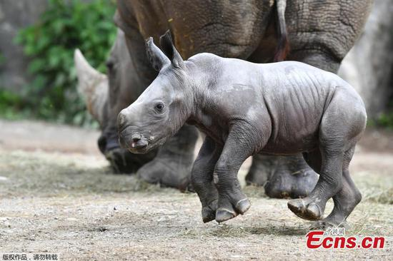 In pics: Cute white rhino cub at zoo in Austria