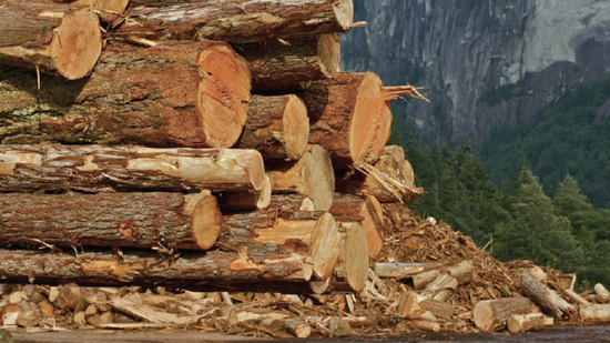 China asks Canada to investigate cause of pest-contaminated logs