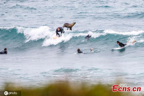 Sea lion helps surfer catch a wave