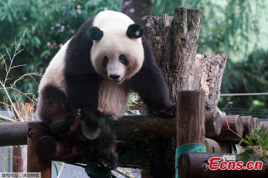 Giant panda attracts crowds as Ueno zoo reopens