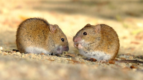 Suspected case of bubonic plague reported in west Mongolia