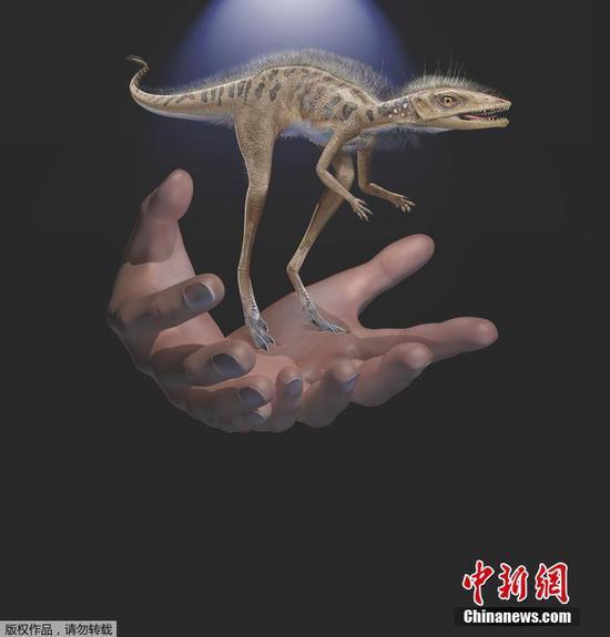 化石揭示了比手机还小的恐龙先驱
