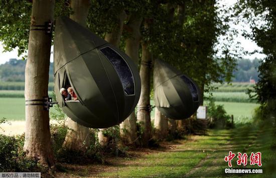 比利时令人难以置信的雨滴状树形帐篷