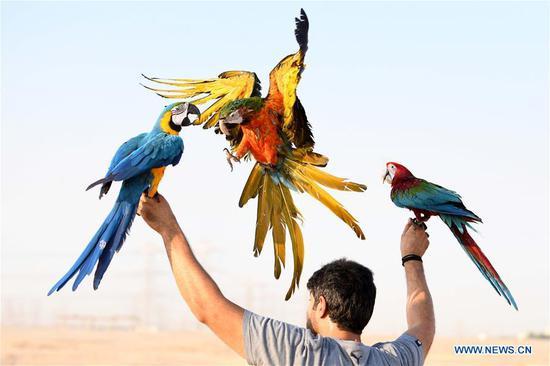在科威特举行的鹦鹉训练表演