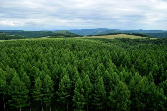 China boosts forest cover amid greening campaign