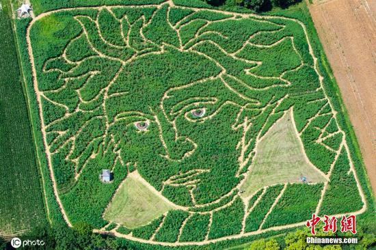 玉米田中创建的巨型迷宫,纪念贝多芬诞辰250周年