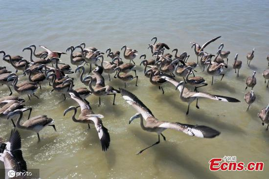 In pics: Flamingos at Izmir Bird Paradise