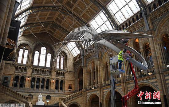 自然历史博物馆为在伦敦重新开放做准备