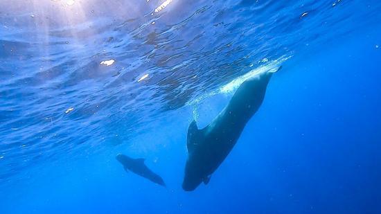 中国研究人员在深海探险中发现了11种鲸鱼