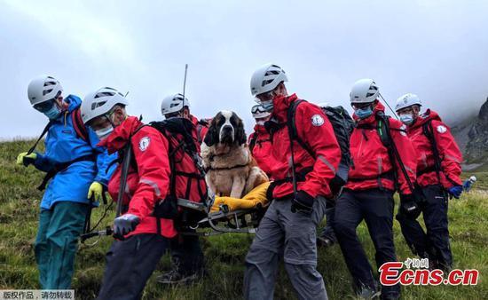圣伯纳德犬从英格兰最高的山上救出后角色被颠倒