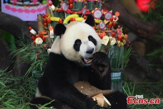 世界上唯一幸存的熊猫三胞胎庆祝六岁生日
