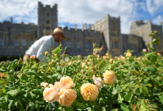 Opening of the East Terrace Garden at Windsor Castle the first time