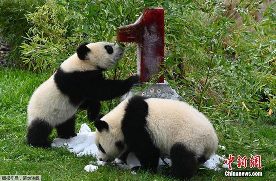 人们在柏林动物园庆祝大熊猫双胞胎的第一个生日