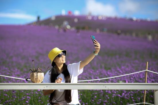 A tourist poses for a selfie in a verbena field in Gaopo Township of Guiyang, capital of southwest China's Guizhou Province, Aug. 14, 2020. (Photo by Zhang Hui/Xinhua)