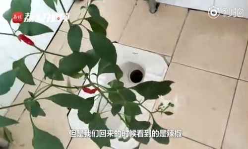 Plant life takes over college dorms left unoccupied due to epidemic