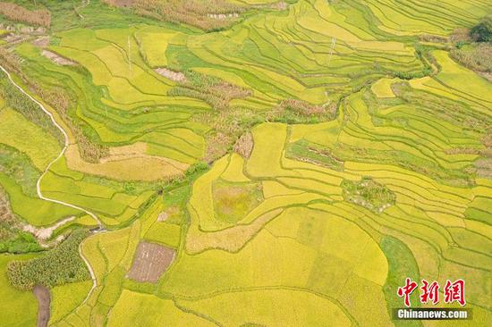 Terraced fields adorn SW China county
