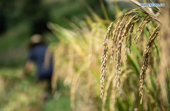 中国农民的丰收节恰逢秋分