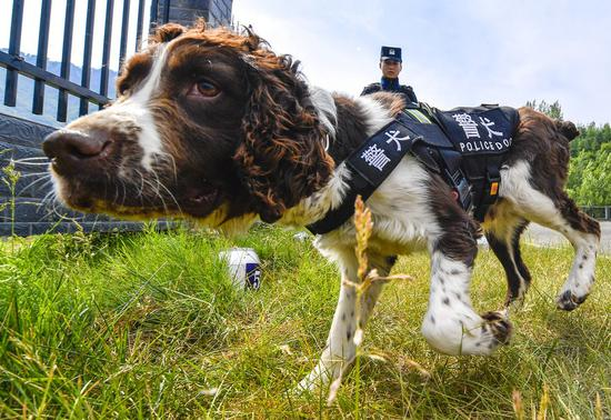 Helsinki Airport set to deploy COVID-19 sniffer dogs