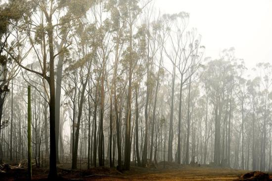 Mass airborne reseeding to help Aussie forests regrow after bushfires