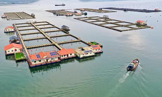 Aerial photo taken on July 15, 2020 shows a mariculture zone in Ningde City, southeast China's Fujian Province. Ningde City has developed a whole industrial chain of large yellow croaker including breeding, processing and marketing. In 2019, the output of large yellow croakers in the city reached about 164,000 tons, accounting for more than 80 percent of the national output and creating output value of over ten billion yuan (1.43 billion U.S dollars). Photo:Xinhua
