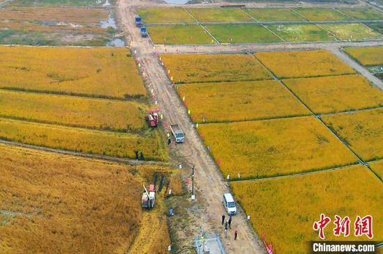 Saline-alkali soil rice provides hope for global food security