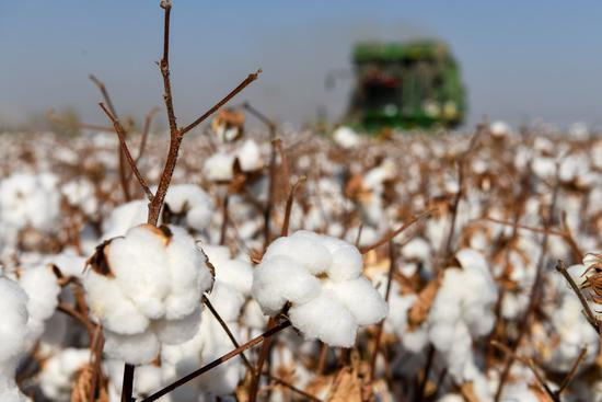 A cotton harvesting machine works in a field in Manas County, Hui Autonomous Prefecture of Changji, northwest China's Xinjiang Uygur Autonomous Region, Oct. 17, 2020. (Xinhua/Ding Lei)