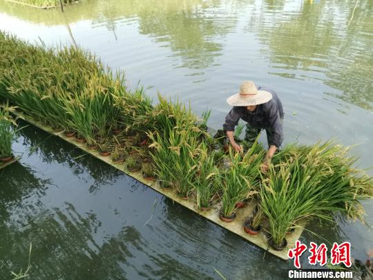 Science &technology key to China's poverty alleviation