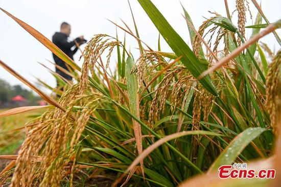 3rd-generation hybrid rice achieves record yields in China