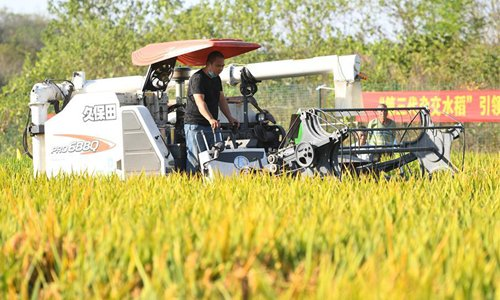 A working staff drives a tractor to harvest the third-generation hybrid rice at a demonstration base in Hengnan County of Hengyang City, central China's Hunan Province, Oct. 21, 2019. (Xinhua/Chen Zeguo)
