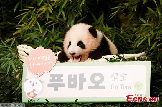First panda cub born in South Korea named Fu Bao