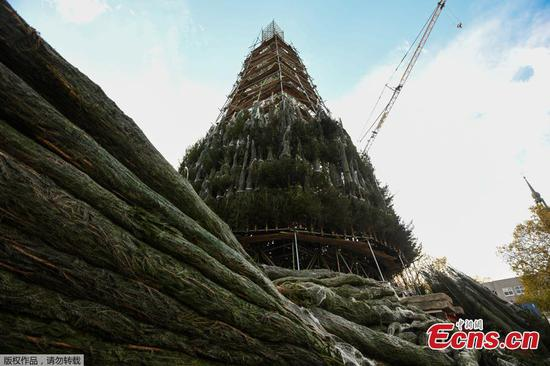 Half-finished Christmas tree in Germany's Dortmund to be halted due to pandemic