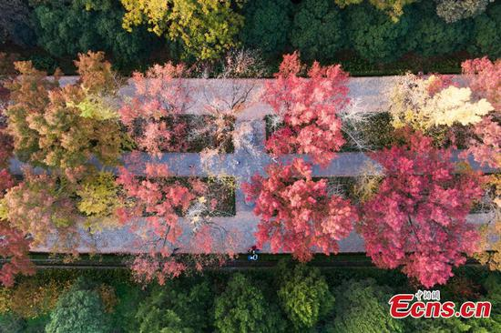Most beautiful road: fall in Nanjing