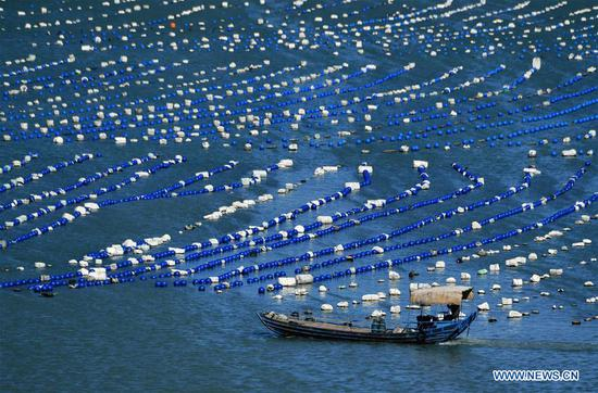 Aquaculture farming areas in Lianjiang, Fujian
