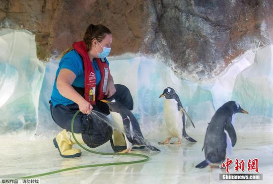 Staff conducts maintenance work at Sea Life Center in Birmingham