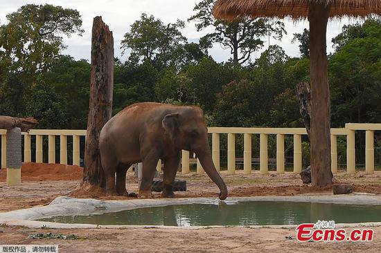 'World's loneliest elephant' begins his new life at Cambodian sanctuary