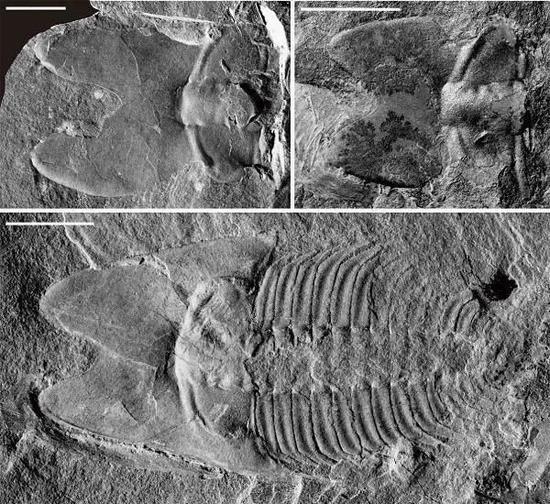 山东发现的古代昆虫化石