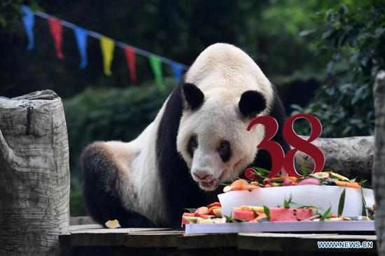 World's oldest captive giant panda passes away