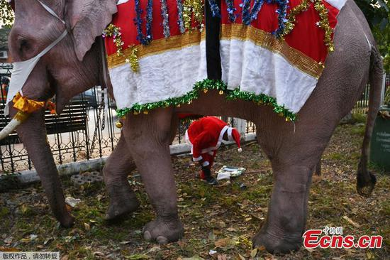 Elephants dressed as Santa Claus to help distribute face masks to students