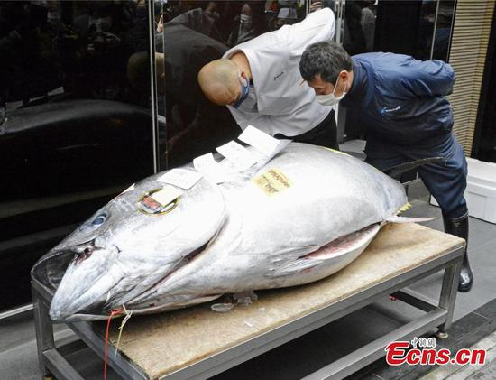 Japan holds annual tuna auction