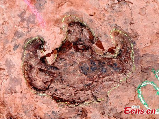 Scientists discover over 240 dinosaur footprints in east China's Fujian