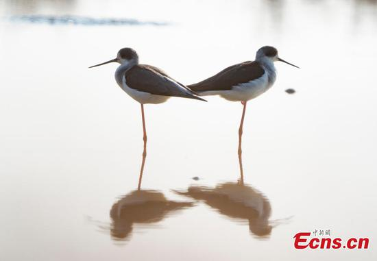 Migratory birds winter in Jiangxi