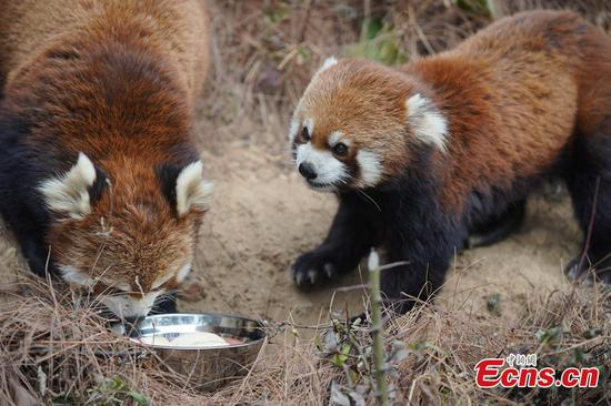 Animals enjoy speical congee for Laba Festival