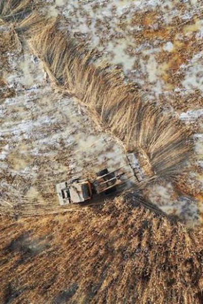Reed harvest on Bosten Lake in Xinjiang