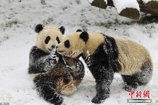 Animals enjoy snow at Belgian Zoo