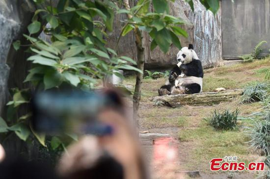 Giant panda An An welcomes visitors at reopened Hong Kong Ocean Park